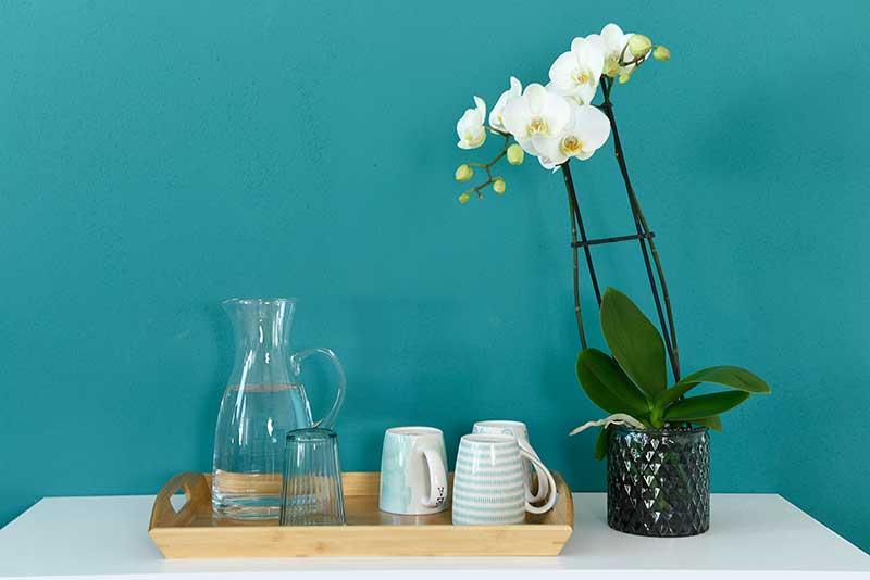 Orchideen und Gläser